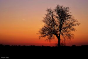 Tree in the evening by bluesgrass
