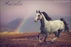 gray horse with rainbow by renderedsublime