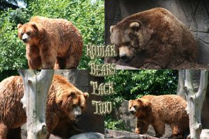 Kodiak Bear Pack - 2 by Seductive-Stock