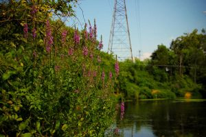 flowers, water, tower by ukeHippie