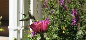 Humming Bird at Temple Square by Oddstuffs