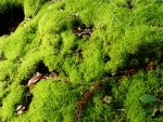 Moss and Leaves by black-heroin