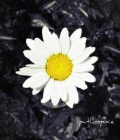 Pathos Daisy by livdrummer