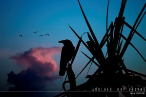 Another Day Begins by Saurav