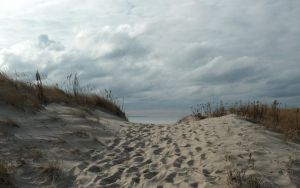 The Dunes At First Encounter Beach by RachelDS