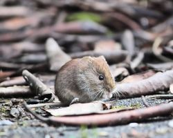 Mouse by Tarjina