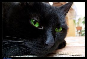 my black cat by VitaCola