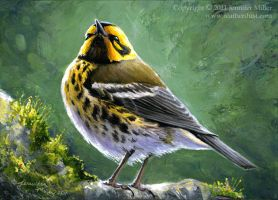 Townsend's Warbler by Nambroth