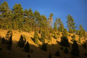 juniper hillside by mescamesh