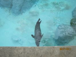 sea lion by BabyImMeee