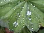 Leaf with raindrops by CaringheartTTR