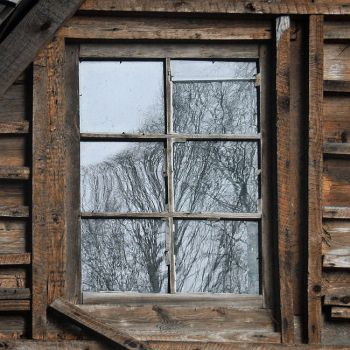 Window and trees by wojtar