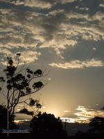 Sunsets on gumtrees by maxisoft
