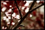 spring in the air by Chilaili1111