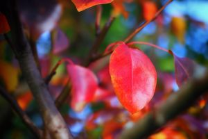 autumnal color by jagerion