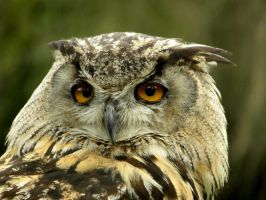 Eagle Owl by soyrwoo