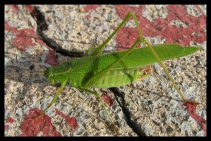 Grasshopper by picworth1000wrds