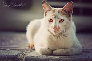 Stray Cat III by NawalAckermann