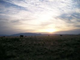 New Mexico Sunset and cows by Snakelady39