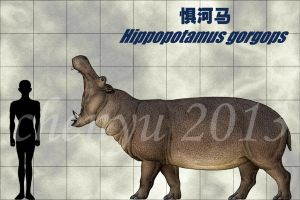 Hippopotamus gorgops by sinammonite