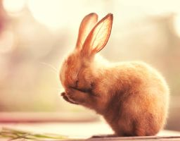 I'm so shy by arefin03