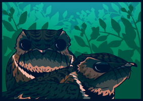 nightjar pair. by sparkpenguin