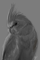 Grayscale Cockatiel speedpaint by whistlebliss