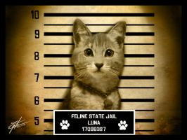 Feline State Jail by srs17