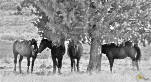 'In Defense Of Our Dreams' by Jphotography-LUV