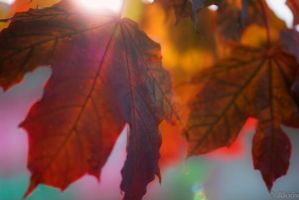 Autumnleaves by Akxiv