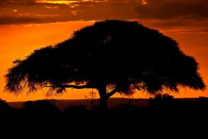 My Africa 22 by catman-suha
