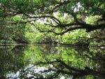 reflecting on the Estero River by dreadedhippie