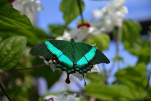 green butterfly by brighthoriz0ns