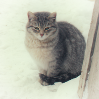 Winter cat by Irkis