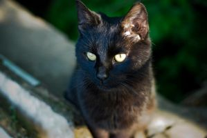 homeless cats 06 by rootkit0