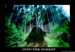 Into The Forest.. by RougeAtten