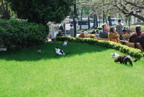 Istanbul Cats by r3code