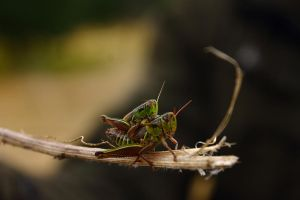 Amor insectoide by jonah03