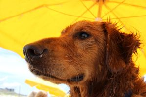 Wet Cooper on the Beach by mrm911