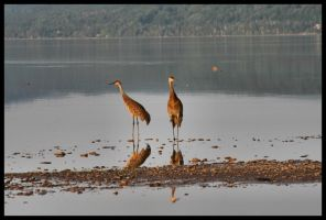 Cranes in the bay by NOS2002