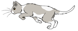 ThunderClan - Dewnose by WildpathOfShadowClan
