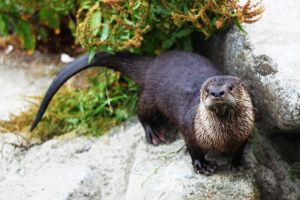 Otterfront by remanere