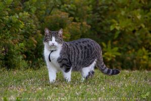 Kitty * by linneaphoto