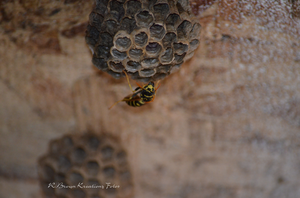 Paper Wasp 3 by RBrownKreationz