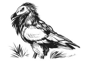 Vulture Sketch by ursulav