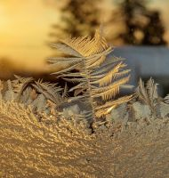 yesterday frost pic 2 by Nipntuck3