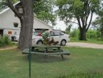 Two Hens on a Picnic Table 1 by Windthin
