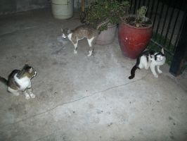 Three stray cats in my house, I love them! nwn by Karu12
