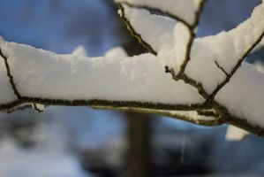 Snow Covered Twigs by ZacharyHill