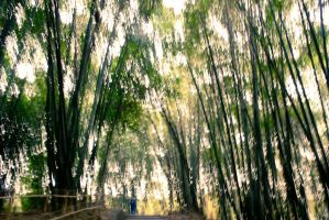 Bamboo forest by clalepa